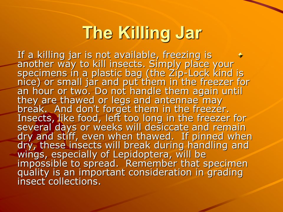 If a killing jar is not available, freezing is another way to kill insects.