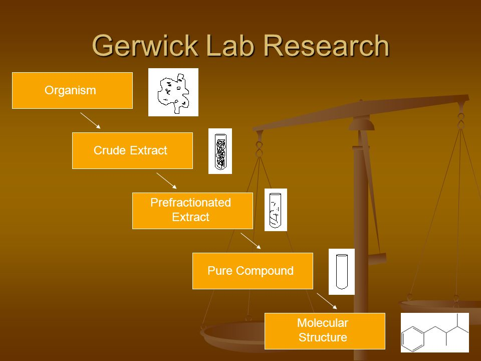 Gerwick Lab Research Crude Extract Prefractionated Extract Pure Compound Molecular Structure Organism