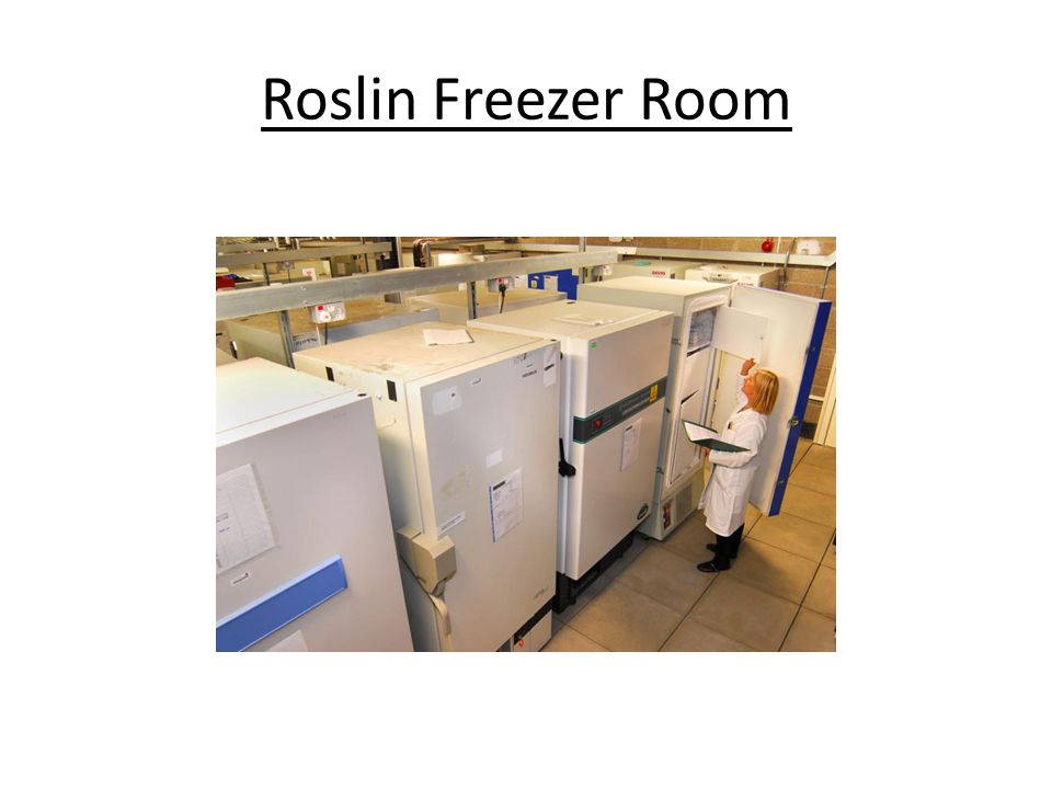 Roslin Freezer Room
