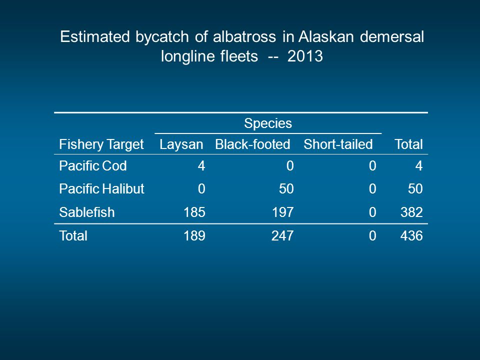 Fishery Target Species Total LaysanBlack-footedShort-tailed Pacific Cod4004 Pacific Halibut0500 Sablefish1851970382 Total1892470436 Estimated bycatch of albatross in Alaskan demersal longline fleets -- 2013