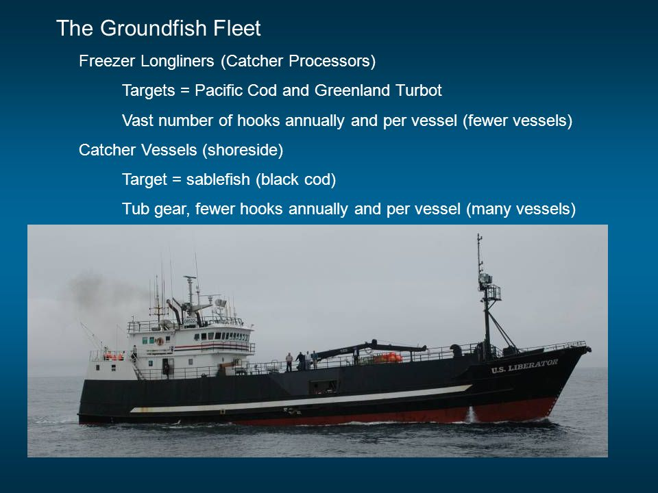 The Groundfish Fleet Freezer Longliners (Catcher Processors) Targets = Pacific Cod and Greenland Turbot Vast number of hooks annually and per vessel (