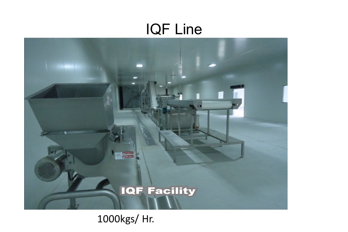 IQF Line 1000kgs/ Hr.