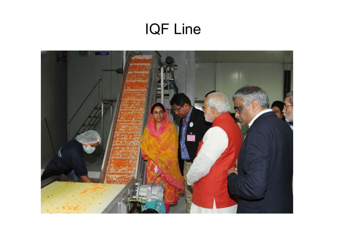 IQF Line