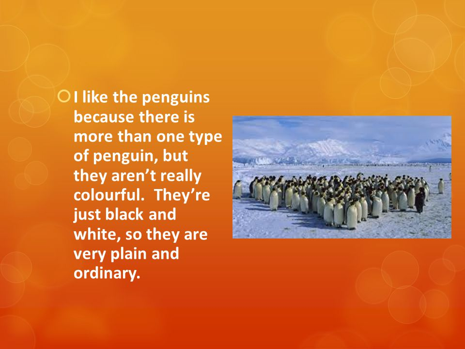  My other favourite ones are the penguins and the arctic mites the artic mites are 1 mm long.