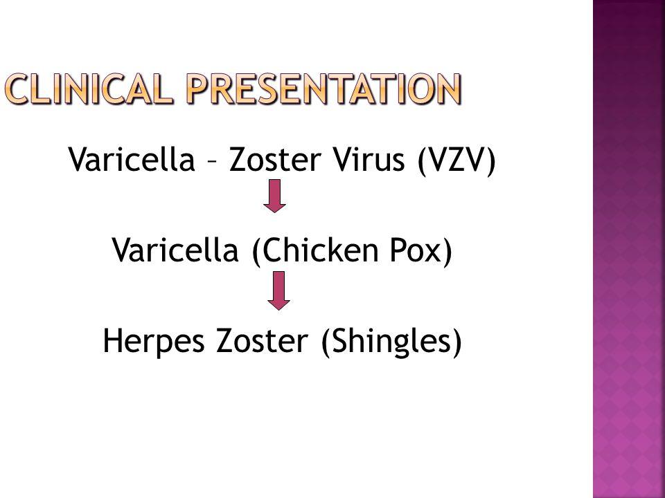 Varicella – Zoster Virus (VZV) Varicella (Chicken Pox) Herpes Zoster (Shingles)