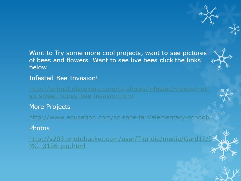 Want to Try some more cool projects, want to see pictures of bees and flowers.