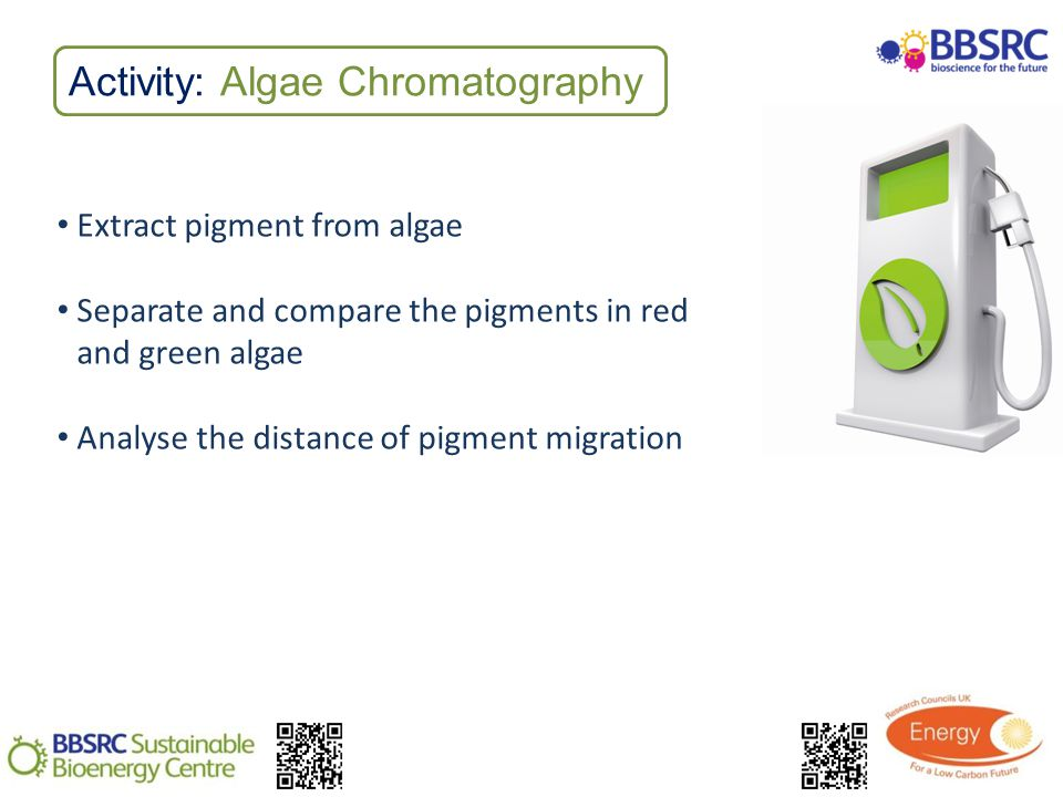 Activity: Algae Chromatography Extract pigment from algae Separate and compare the pigments in red and green algae Analyse the distance of pigment migration