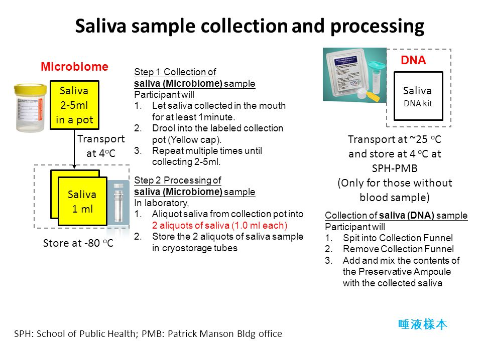 SPH: School of Public Health; PMB: Patrick Manson Bldg office 唾液樣本 Saliva 1 ml Microbiome Saliva 1 ml Transport at 4 o C Saliva 2-5ml in a pot Step 1