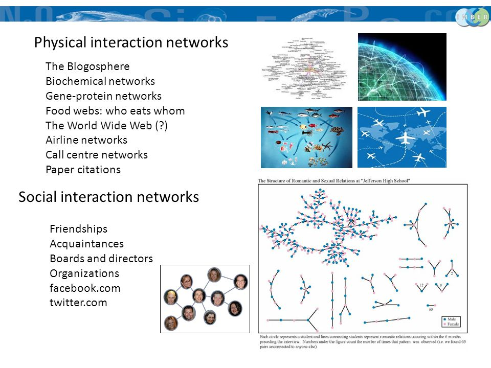 The Blogosphere Biochemical networks Gene-protein networks Food webs: who eats whom The World Wide Web (?) Airline networks Call centre networks Paper