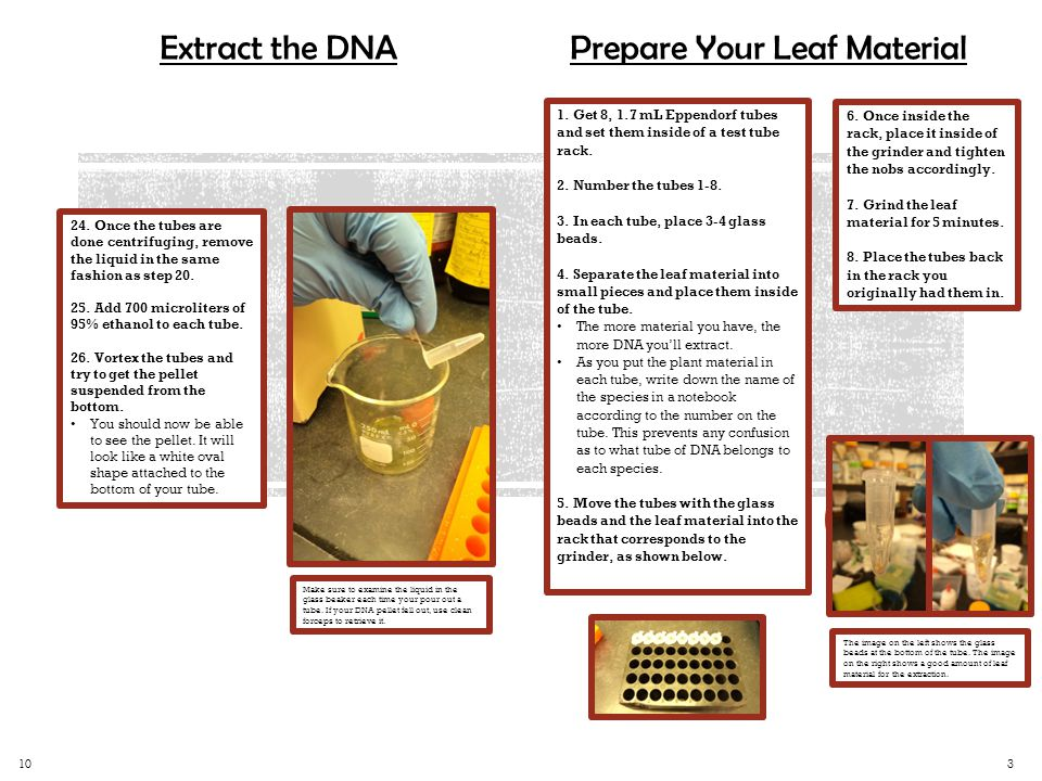 Extract the DNA 1.
