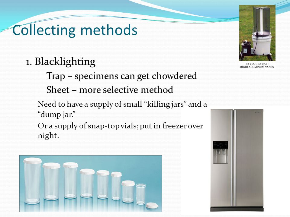 """Collecting methods 1. Blacklighting Trap – specimens can get chowdered Sheet – more selective method Need to have a supply of small """"killing jars"""" and"""
