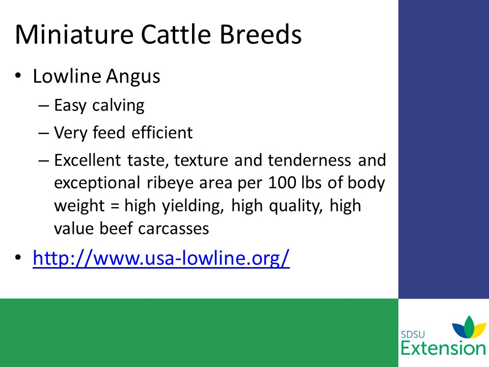 Miniature Cattle Breeds Lowline Angus – Easy calving – Very feed efficient – Excellent taste, texture and tenderness and exceptional ribeye area per 100 lbs of body weight = high yielding, high quality, high value beef carcasses http://www.usa-lowline.org/