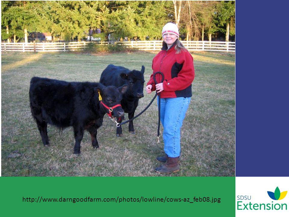 http://www.darngoodfarm.com/photos/lowline/cows-az_feb08.jpg