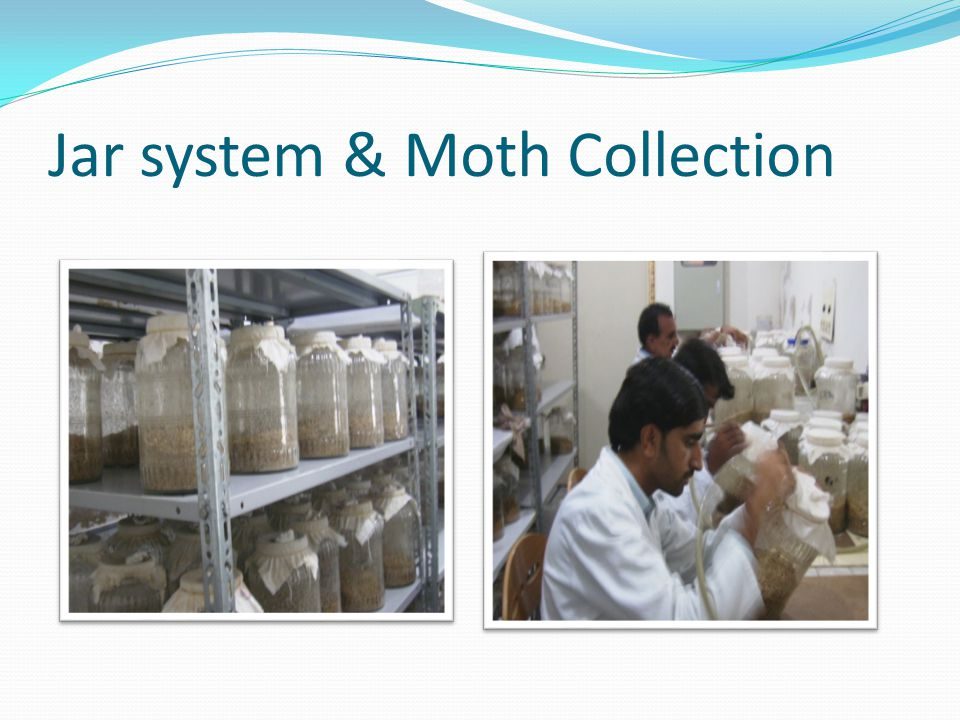 Jar system & Moth Collection
