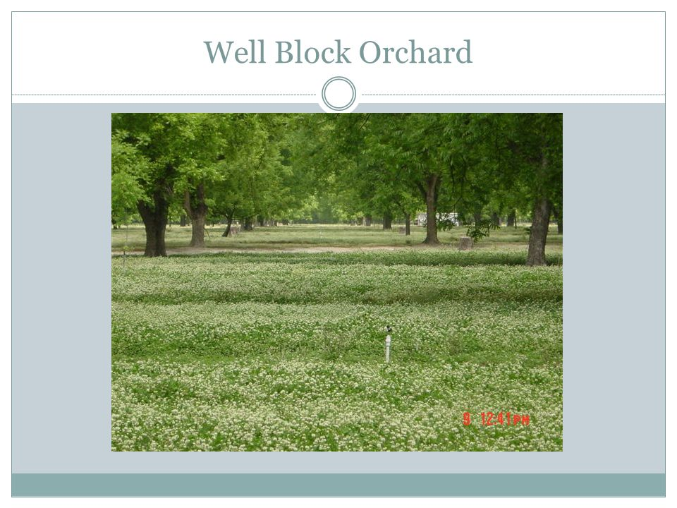 Well Block Orchard