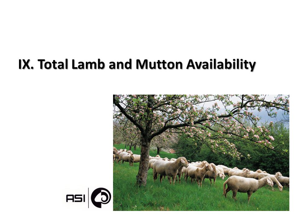 IX. Total Lamb and Mutton Availability