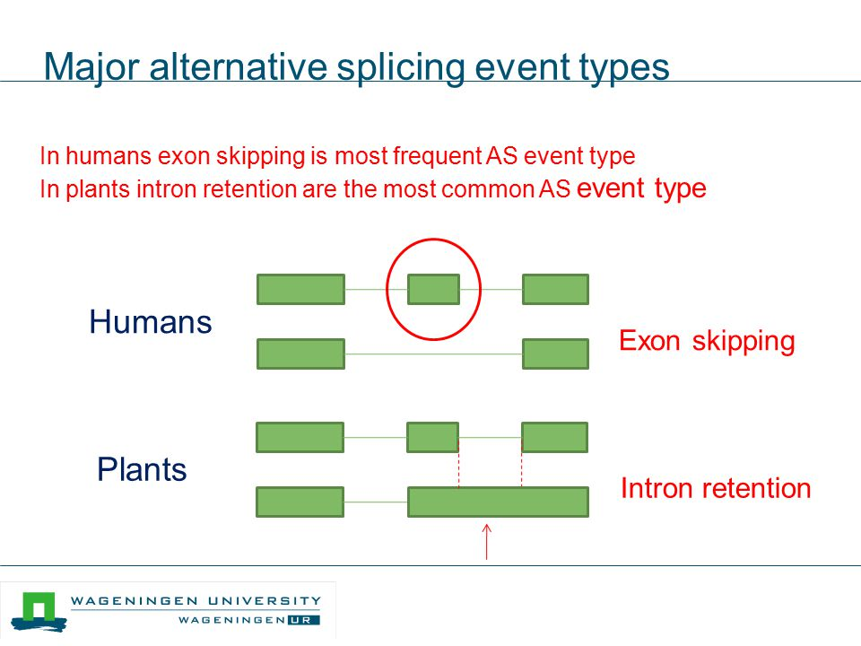 Major alternative splicing event types Exon skipping Intron retention Humans Plants In humans exon skipping is most frequent AS event type In plants i