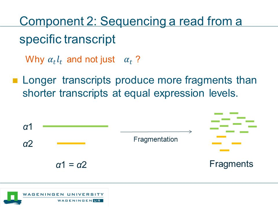 Component 2: Sequencing a read from a specific transcript Why and not just ? Longer transcripts produce more fragments than shorter transcripts at equ
