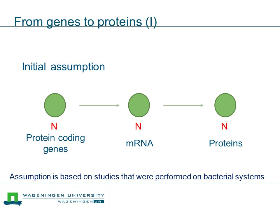 From genes to proteins (I) Initial assumption N Protein coding genes N mRNA Molecules N Proteins Assumption is based on studies that were performed on