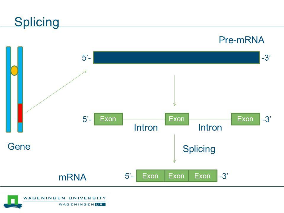 Alternative splicing 5'--3' Pre-mRNA 5'- -3' 5'--3' Splicing 5'--3' Splicing 5'- -3'