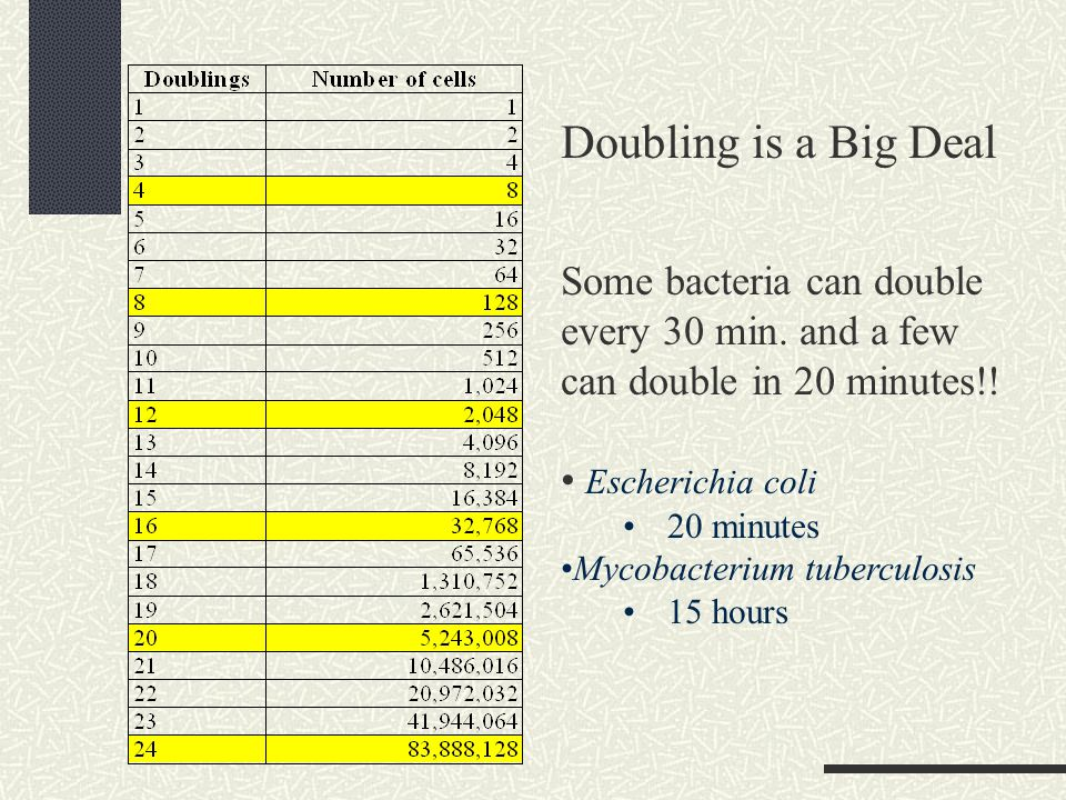 Doubling is a Big Deal Some bacteria can double every 30 min.