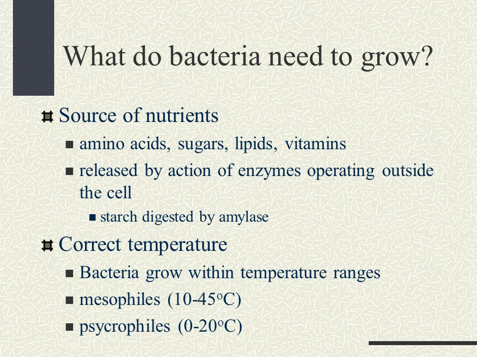 What do bacteria need to grow.