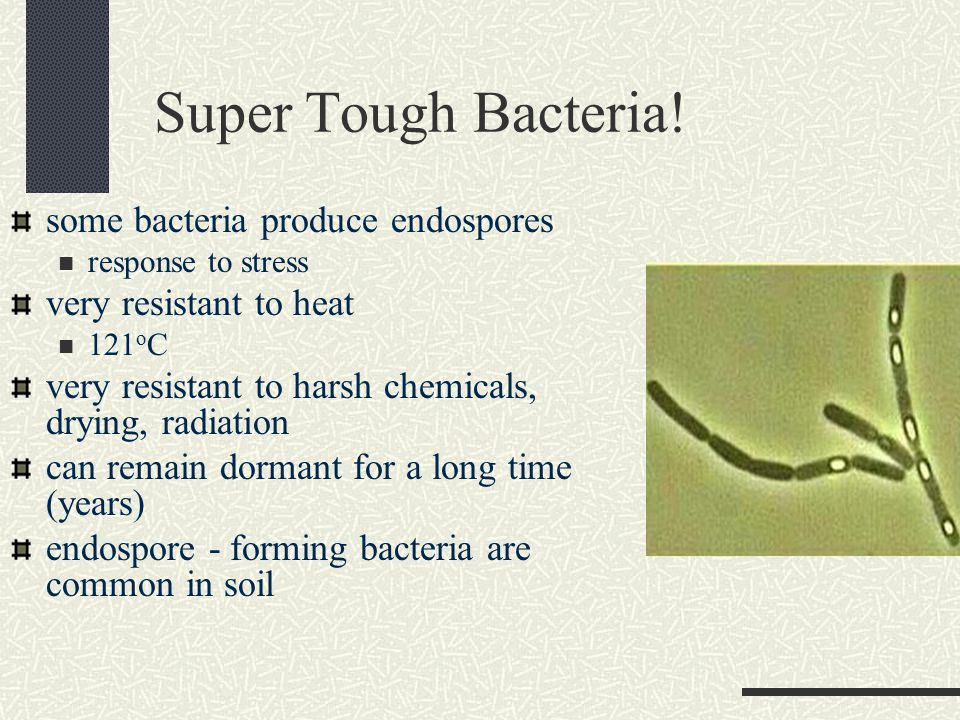 Super Tough Bacteria.
