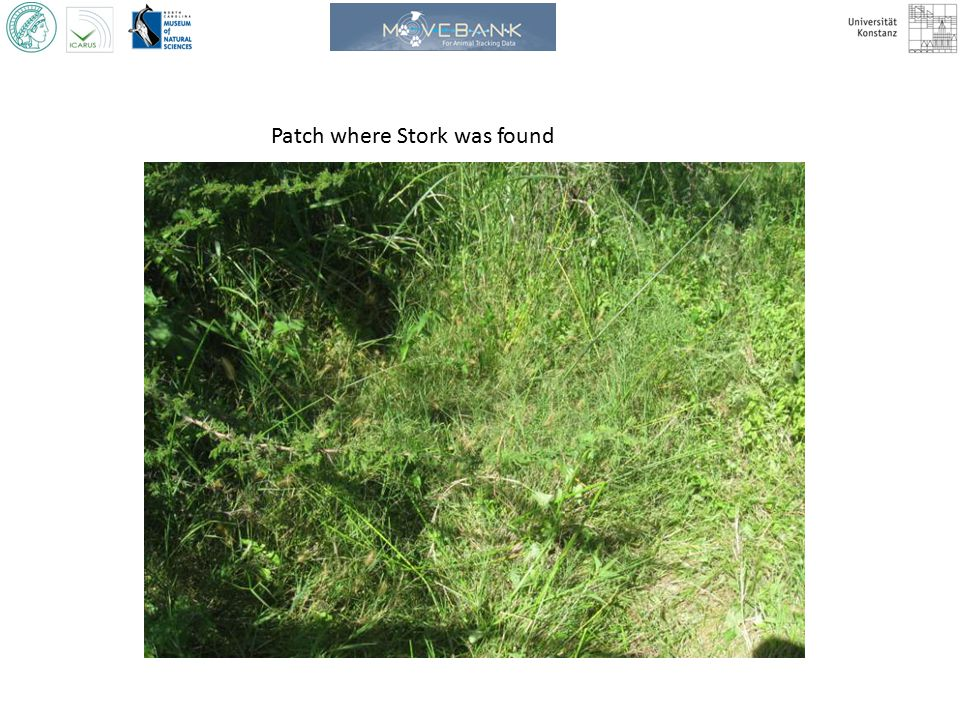 Patch where Stork was found