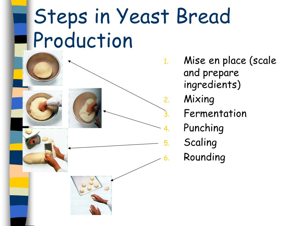 Steps in Yeast Bread Production 1. Mise en place (scale and prepare ingredients) 2.
