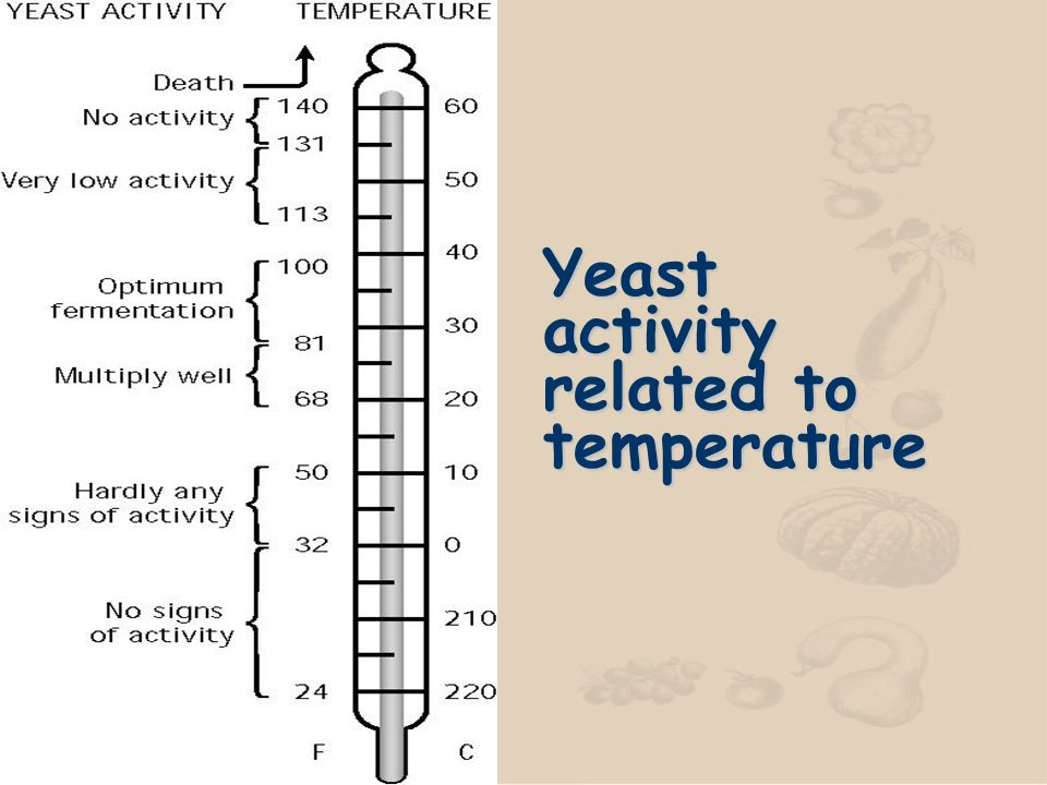 n Fermentation time varies depending on the kind and amount of yeast, the temperature of the room, and the kind of flour.