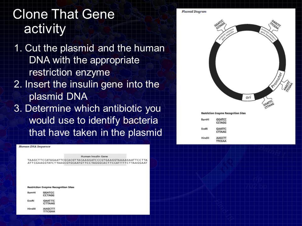 Clone That Gene activity 1.