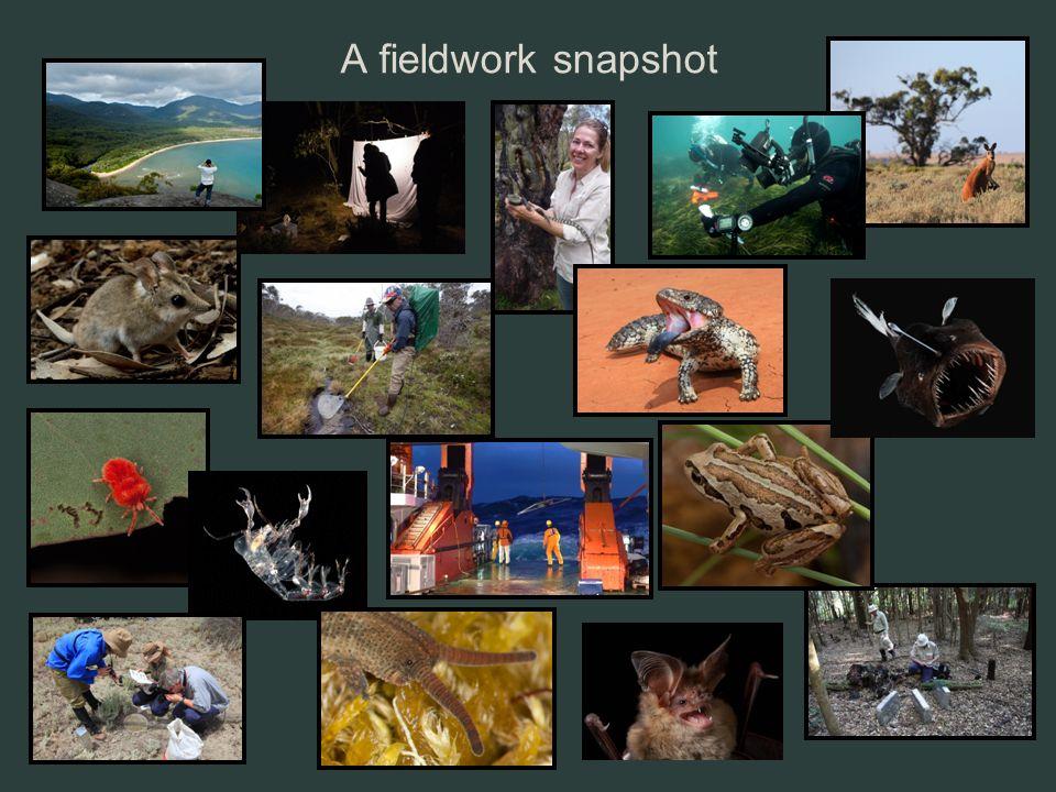 A fieldwork snapshot