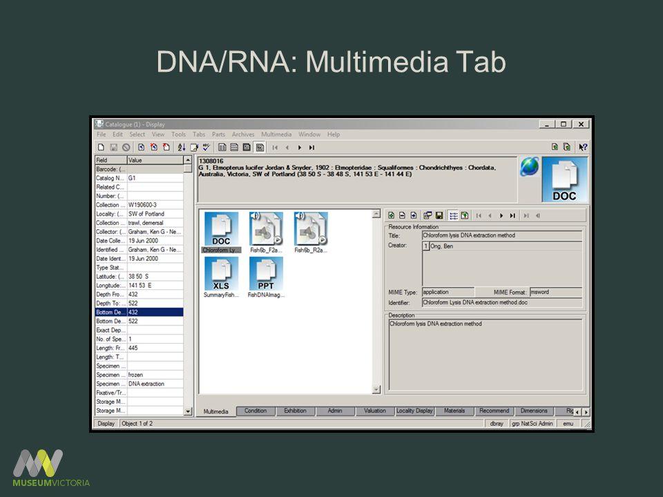 DNA/RNA: Multimedia Tab