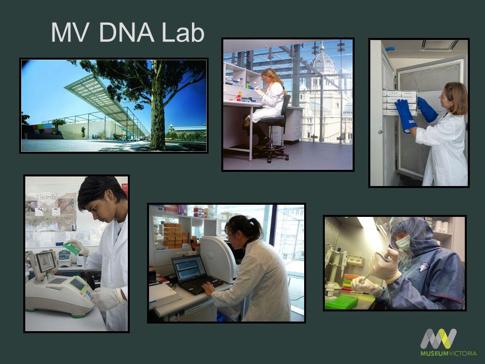 MV DNA Lab