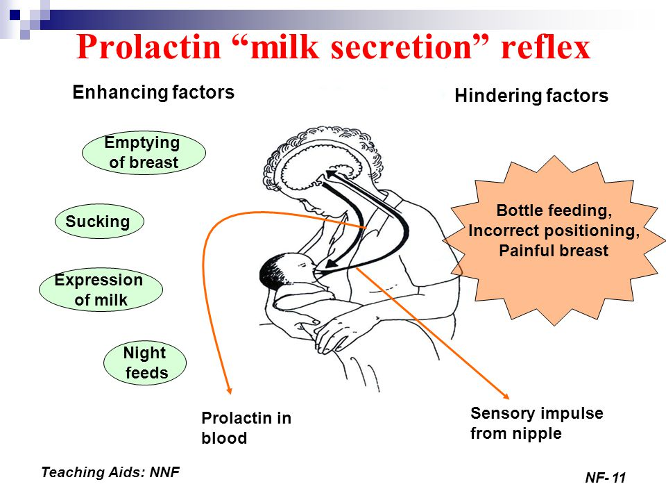 NF-11 Teaching Aids: NNF Enhancing factors Hindering factors Emptying of breast Sucking Expression of milk Night feeds Bottle feeding, Incorrect positioning, Painful breast Sensory impulse from nipple Prolactin in blood Prolactin milk secretion reflex