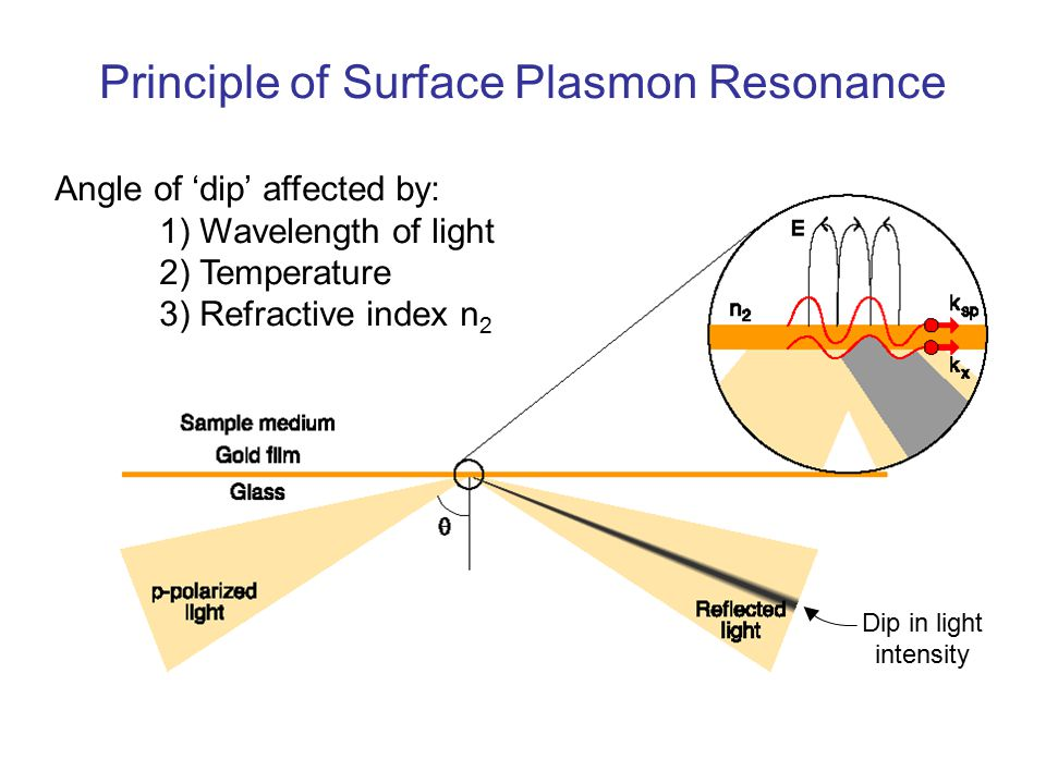 Principle of Surface Plasmon Resonance Angle of 'dip' affected by: 1) Wavelength of light 2) Temperature 3) Refractive index n 2 Dip in light intensity