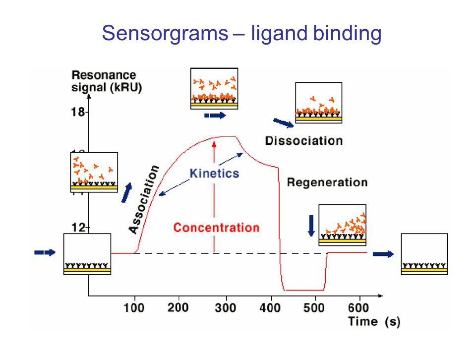 Sensorgrams – ligand binding
