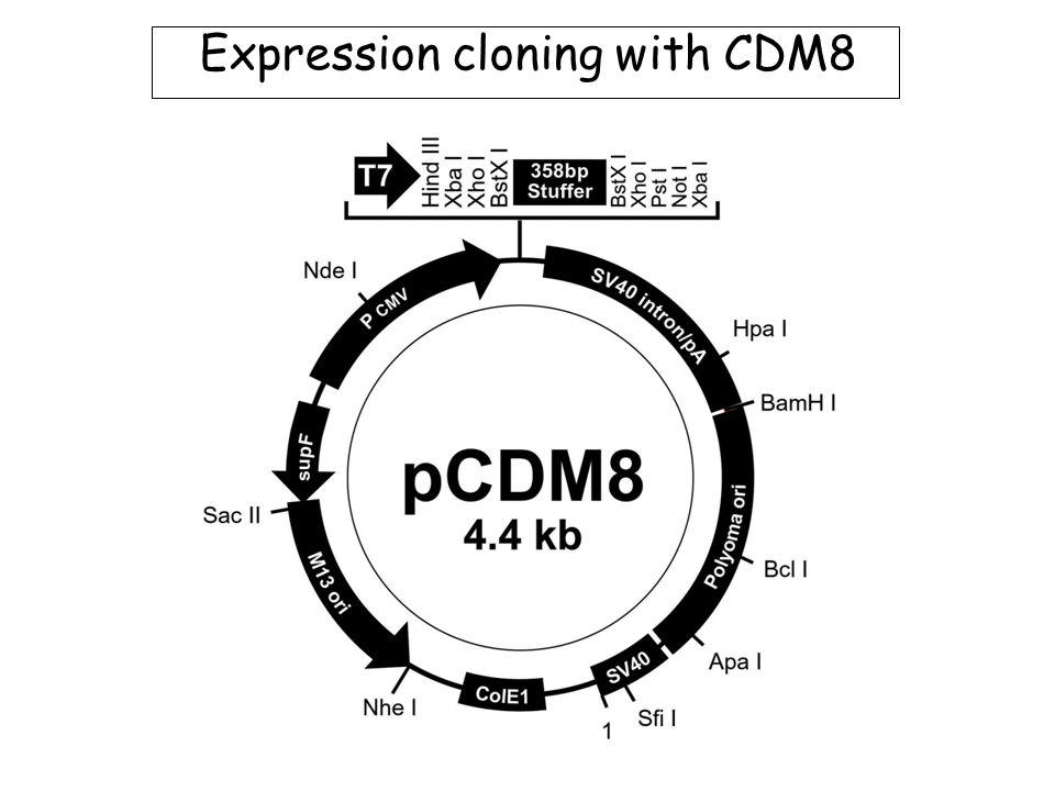 Immobilisation: sensor chip technology CM5 chips (most common): Ligand capture via native groups (see next) SA: Coated in streptavidin for capture of biotinylated molecules.
