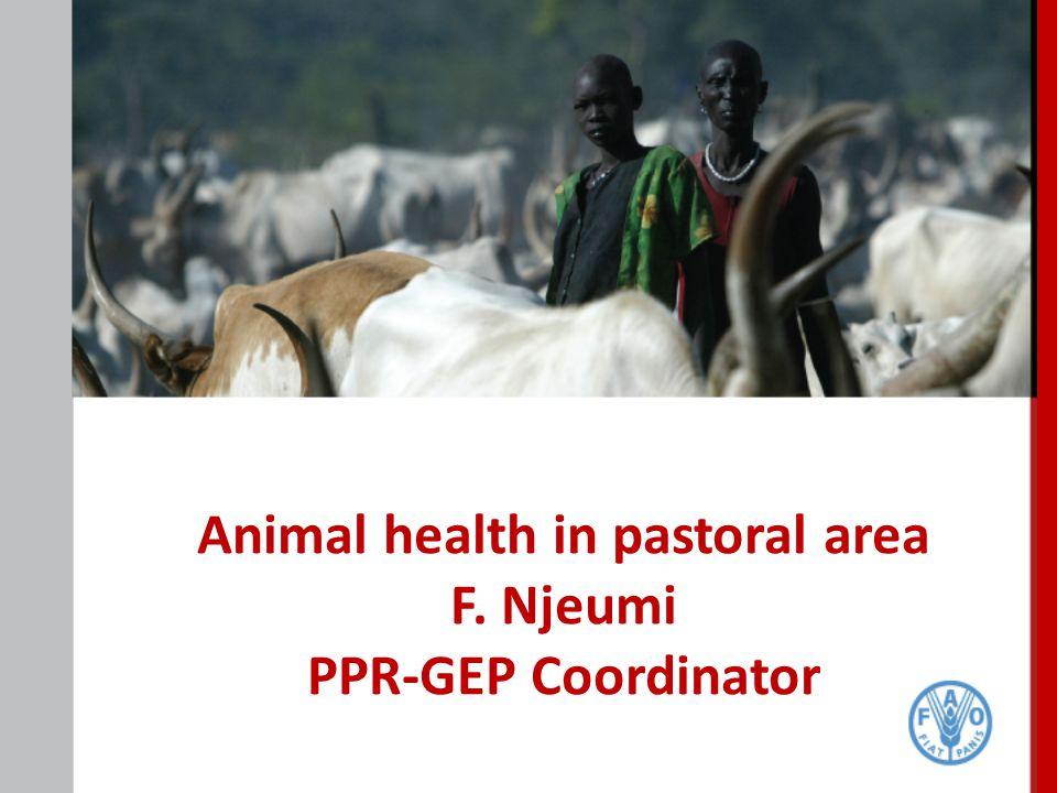 Animal health in pastoral area F. Njeumi PPR-GEP Coordinator
