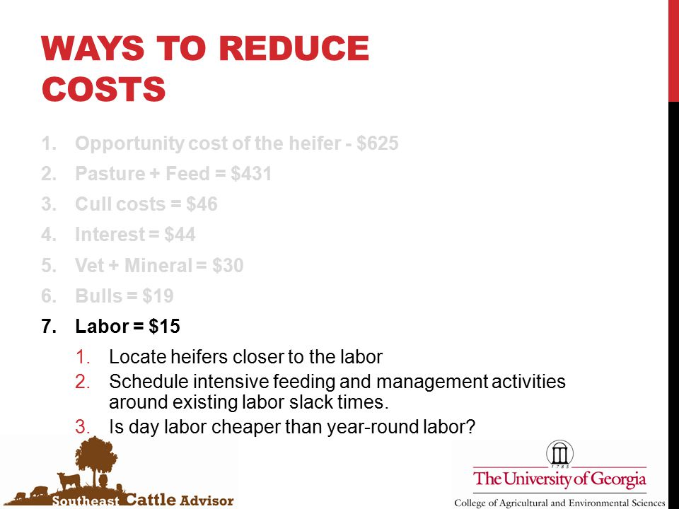 WAYS TO REDUCE COSTS 1.Opportunity cost of the heifer - $625 2.Pasture + Feed = $431 3.Cull costs = $46 4.Interest = $44 5.Vet + Mineral = $30 6.Bulls