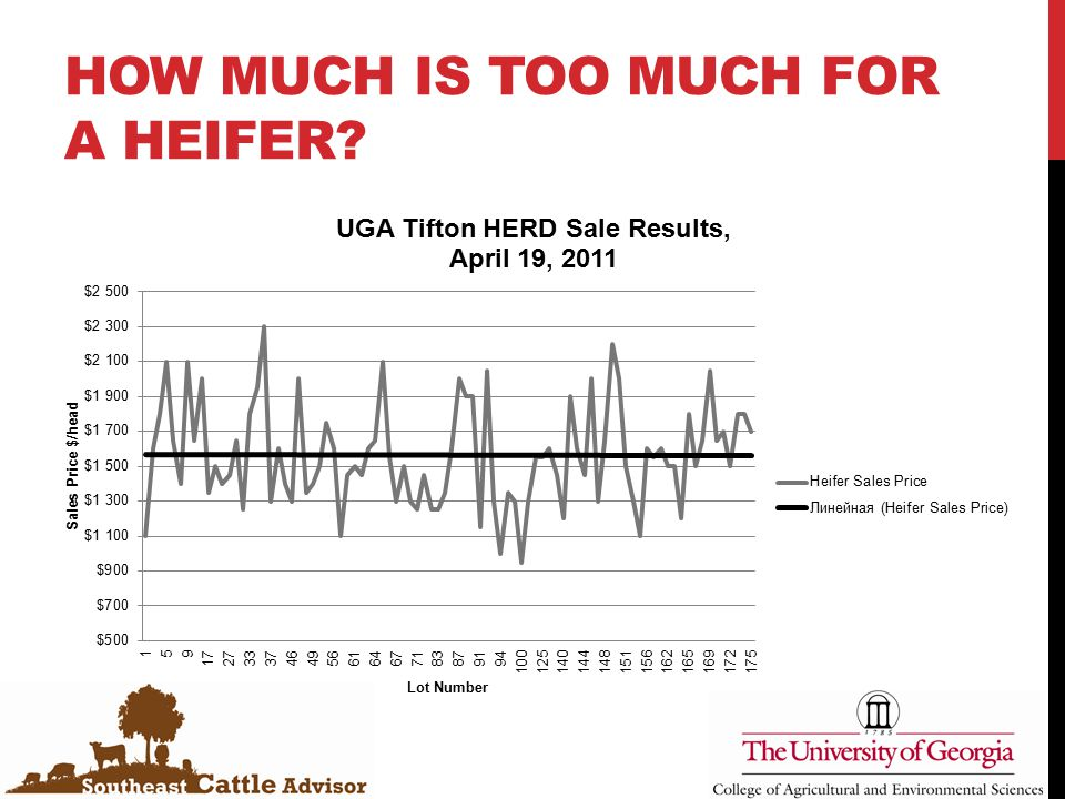 HOW MUCH IS TOO MUCH FOR A HEIFER?
