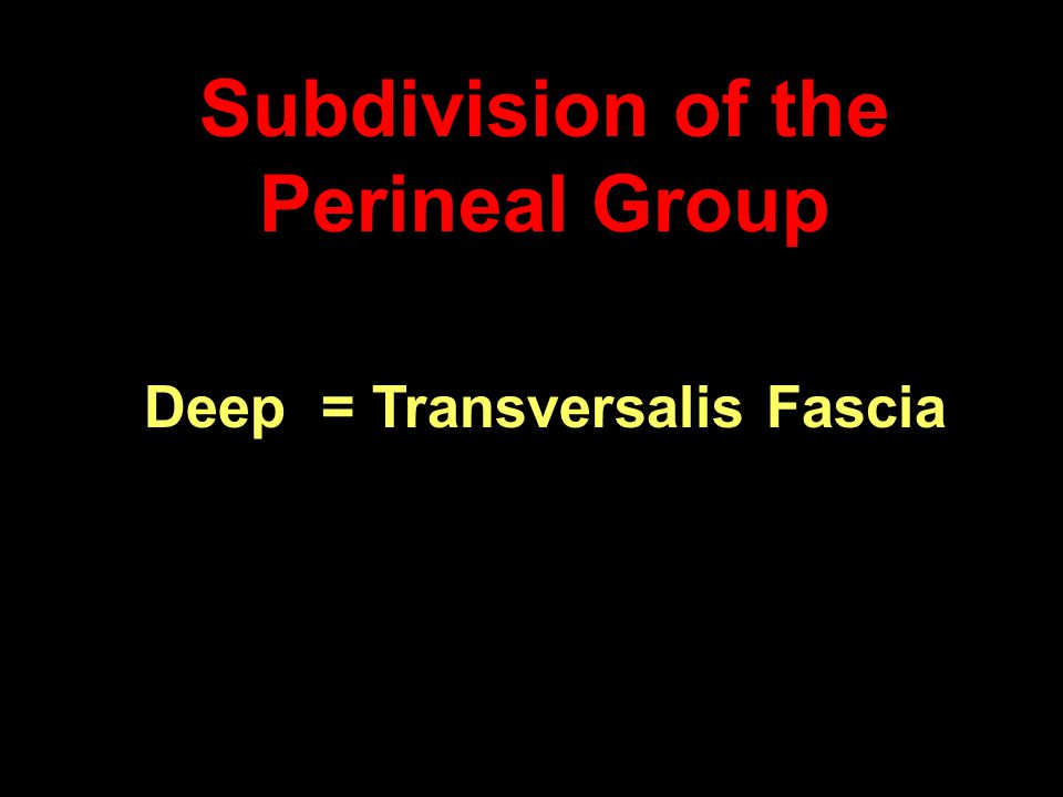 Subdivision of the Perineal Group Deep = Transversalis Fascia