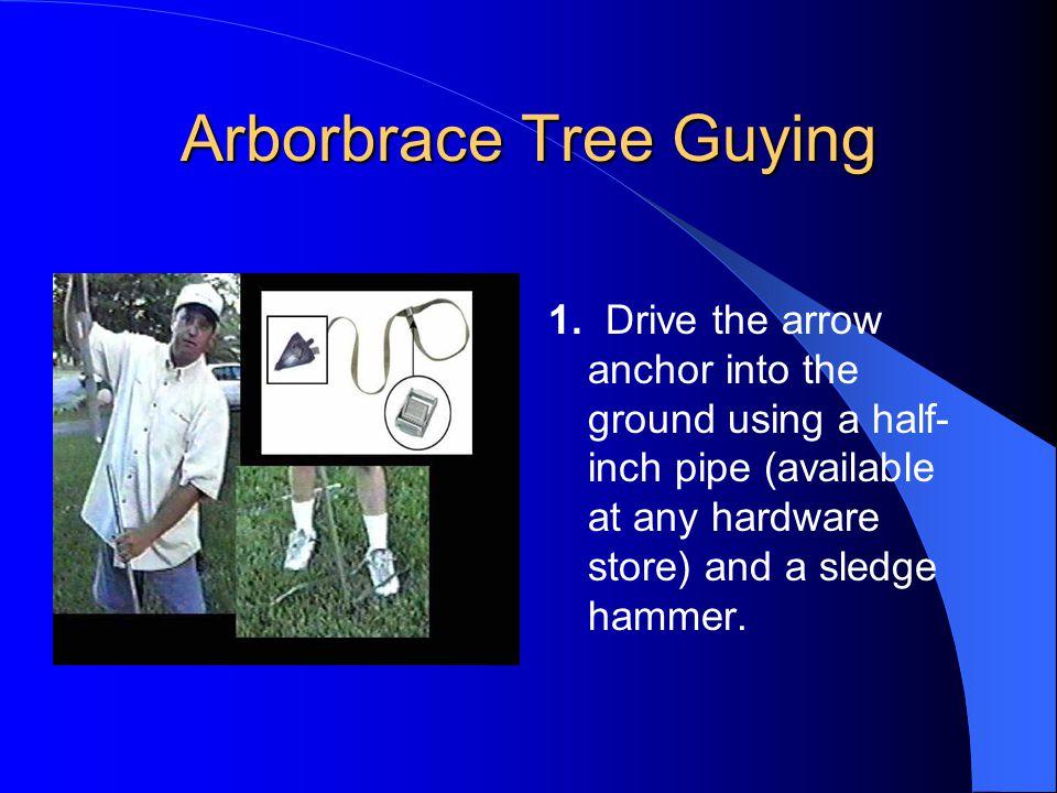 Arborbrace Tree Guying 2.