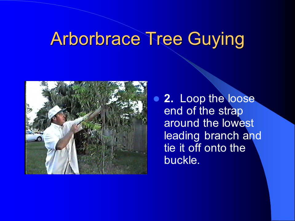 Arborbrace Tree Guying 2.