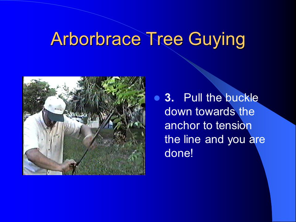 Arborbrace Tree Guying CAD or PDF File Available on Web Site for Specifying www.treestaking.com