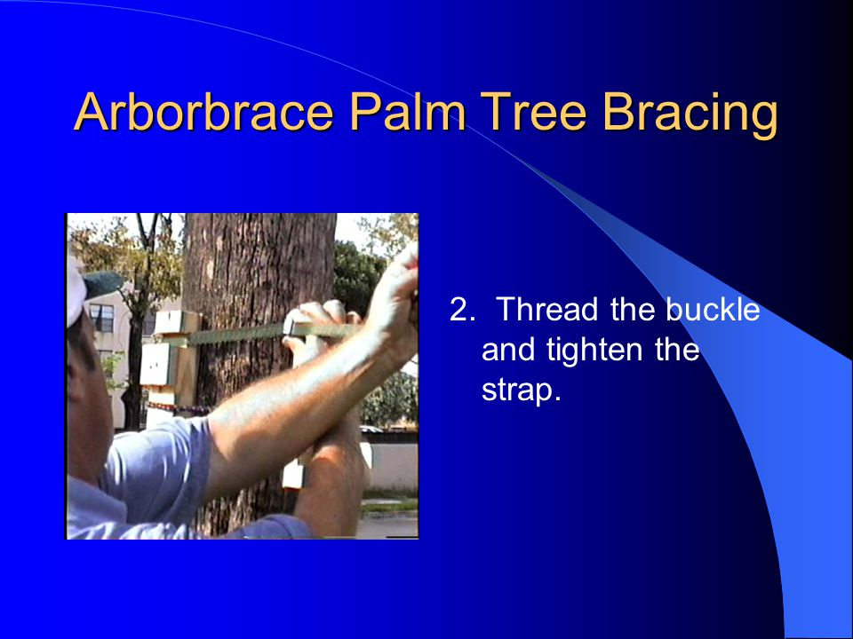 Arborbrace Palm Tree Bracing 2. Thread the buckle and tighten the strap.