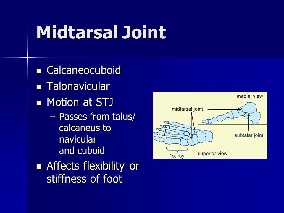 Midtarsal Joint Calcaneocuboid Calcaneocuboid Talonavicular Talonavicular Motion at STJ Motion at STJ –Passes from talus/ calcaneus to navicular and c
