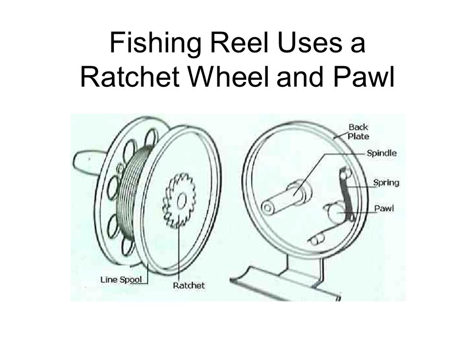 Fishing Reel Uses a Ratchet Wheel and Pawl