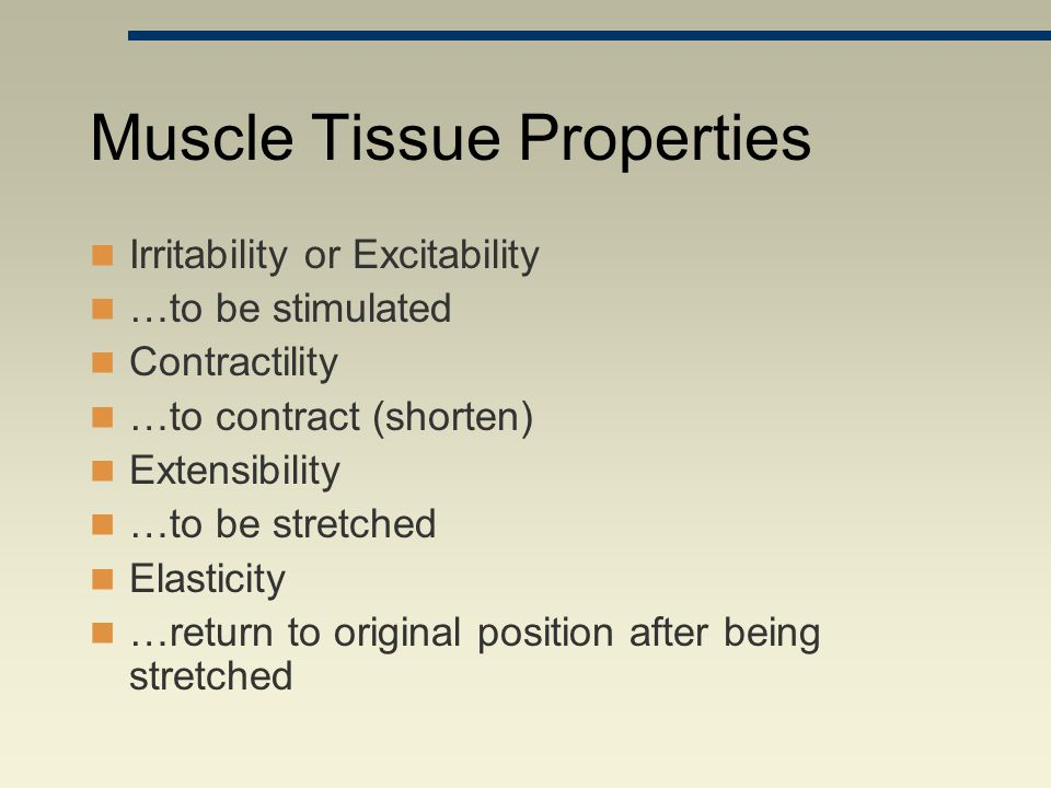 Muscle Tissue Properties Irritability or Excitability …to be stimulated Contractility …to contract (shorten) Extensibility …to be stretched Elasticity