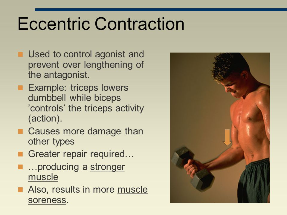 Eccentric Contraction Used to control agonist and prevent over lengthening of the antagonist. Example: triceps lowers dumbbell while biceps 'controls'